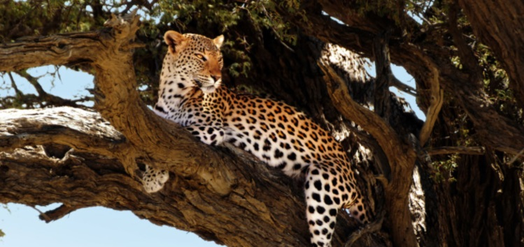 Travel Incentive Idea: African Safari