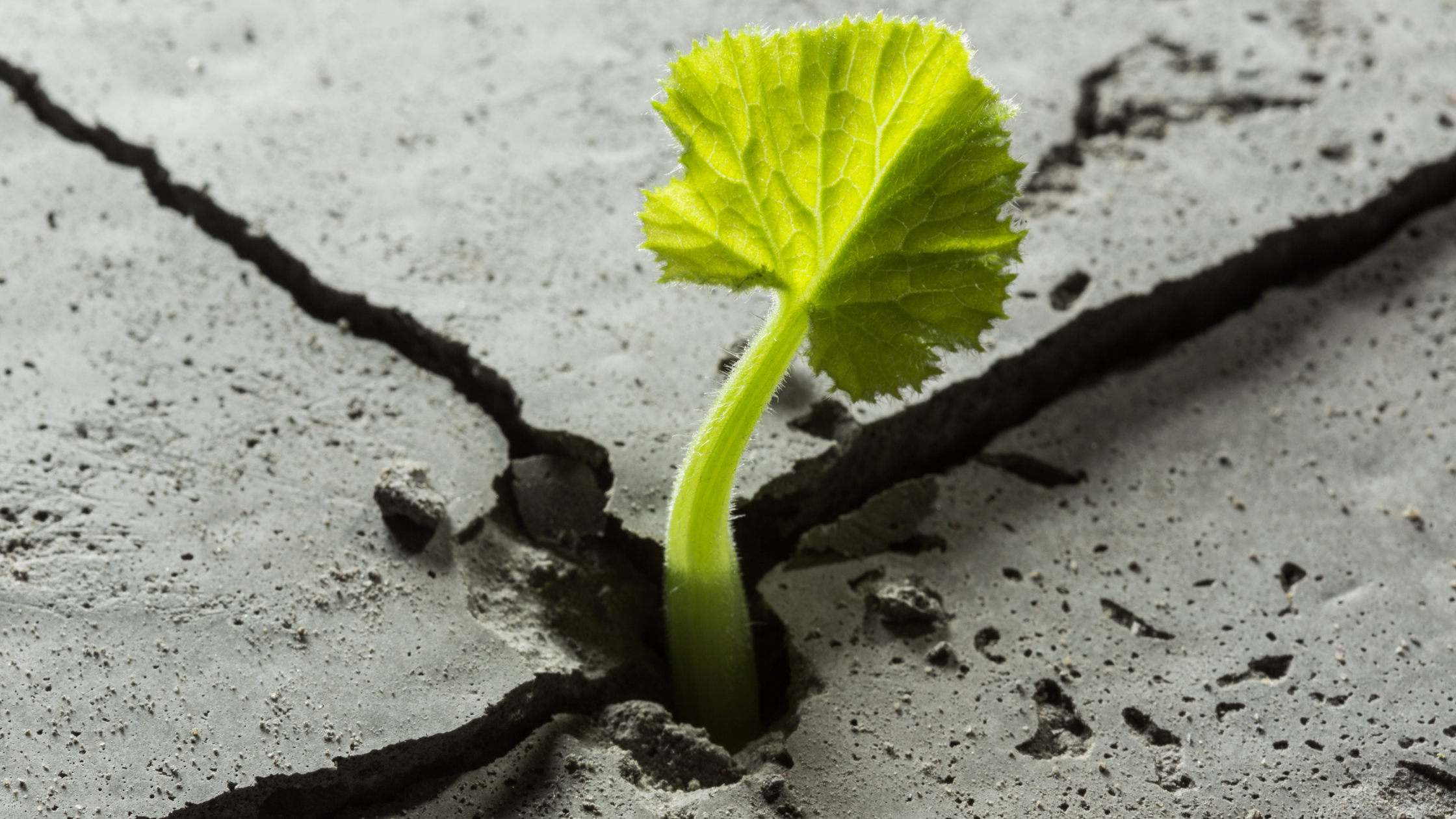 Building resilience is key for companies to adapt